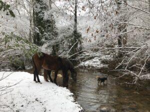 caballos felices disfrutando en la naturaleza